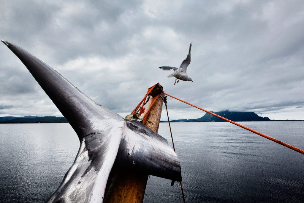 © Marcus Bleasdale / Viking Whalers